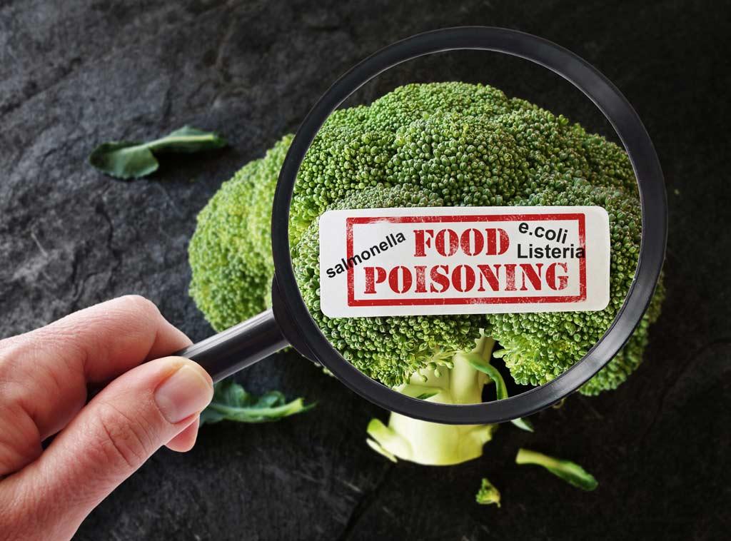 bacteria_food_illness_safety